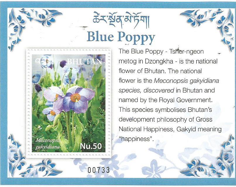 BHUTAN BLUE POPPY MS