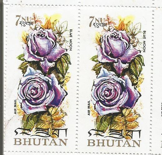 ROSES BHUTAN