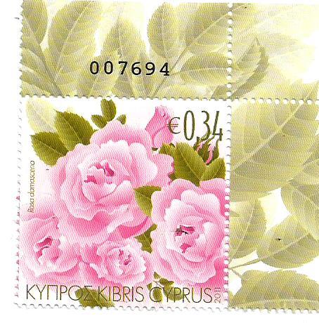 ROSES CYPRUS