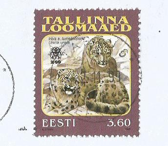 ESTONIA - TALLINN ZOO -SNOW LEOPARD