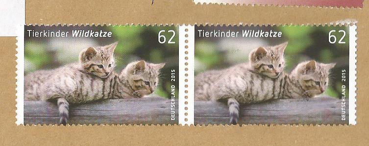 GERMANY CATS