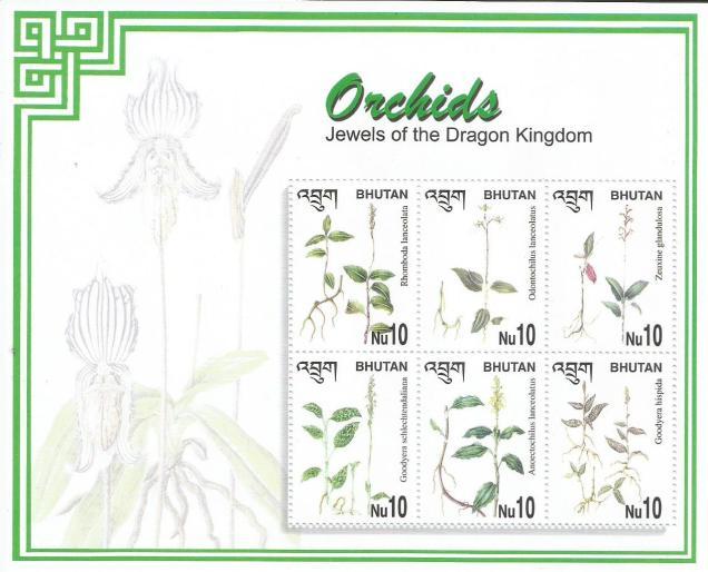 BHUTAN ORCHIDS MS