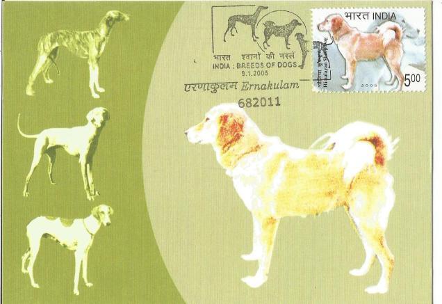 INDIA MC HIMALAYAN SHEEP DOG