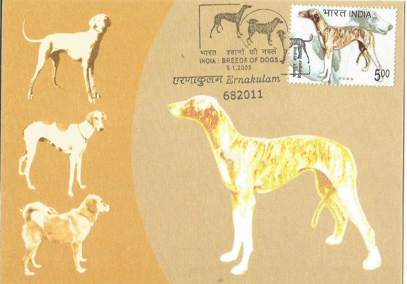 INDIA MC MUDHOL HOUND