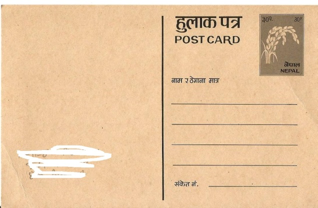 NEPAL PC RICE PLANT