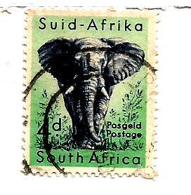 AFRICAN ELEPHANT -1954