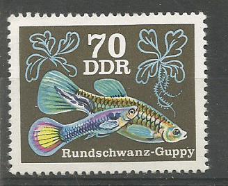 GDR 76 GUPPY 70P