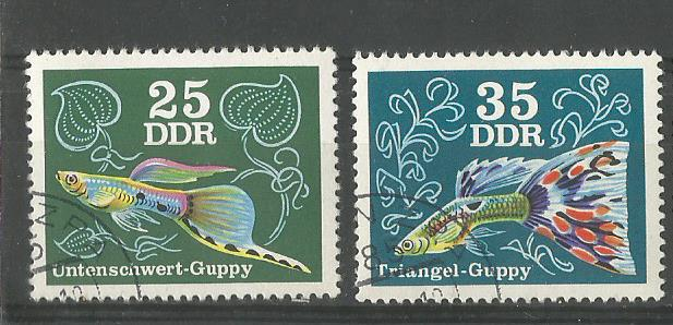 GDR GUPPY 2