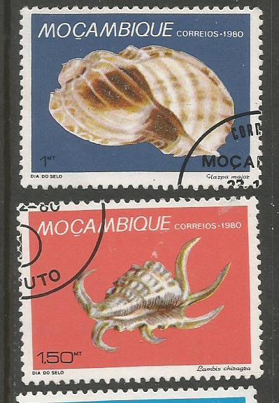 MOZAMBIQUE SEA SHELLS 1