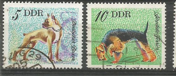 GDR DOGS 1