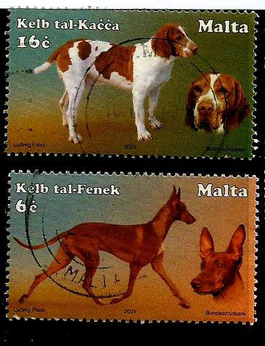 MALTA DOGS