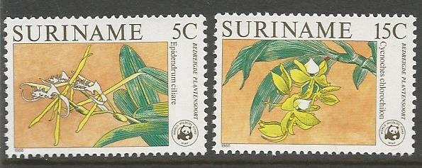 SURINAME ORCHIDS 1