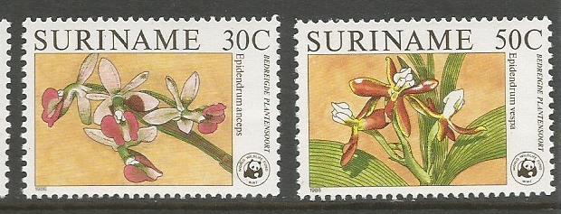 SURINAME ORCHIDS 2