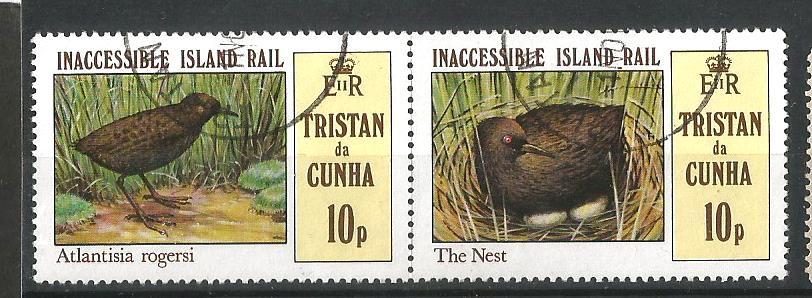 TRISTAN EGG BIRDS 1