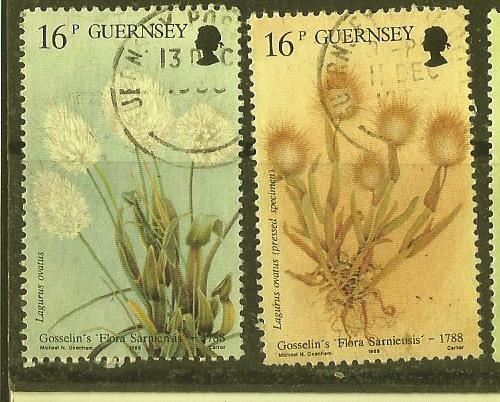 GUERNSEY FLOWERS1