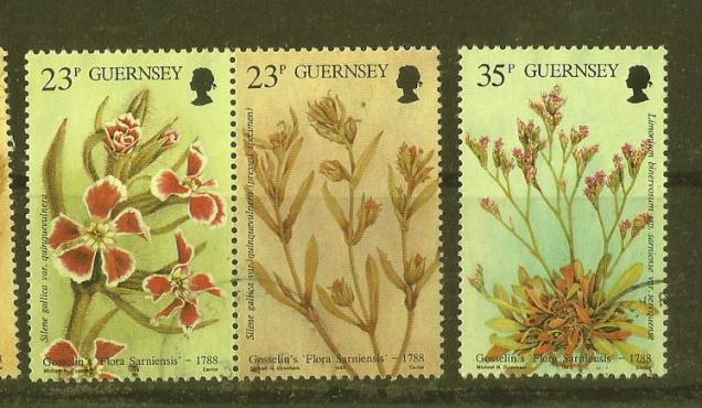 GUERNSEY FLOWERS2