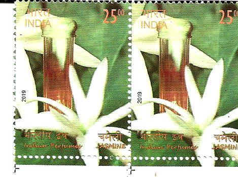 INDIA JASMINE 2