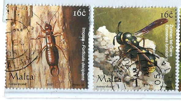 MALTA INSECTS 3