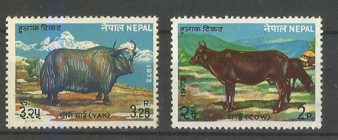NEPAL CATTLE