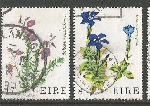 IRELAND FLOWERS 1