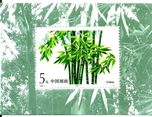 CHINA MS BAMBOO