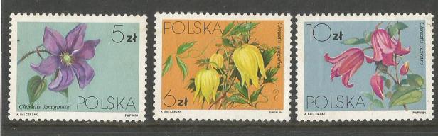POLAND FLOWERS1