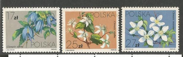 POLAND FLOWERS2