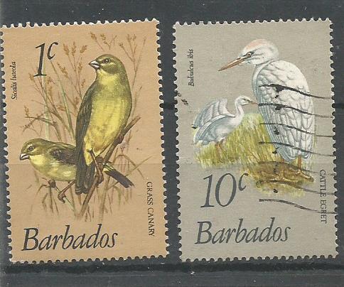 BARBADOS BIRDS 1