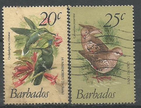 BARBADOS BIRDS 2