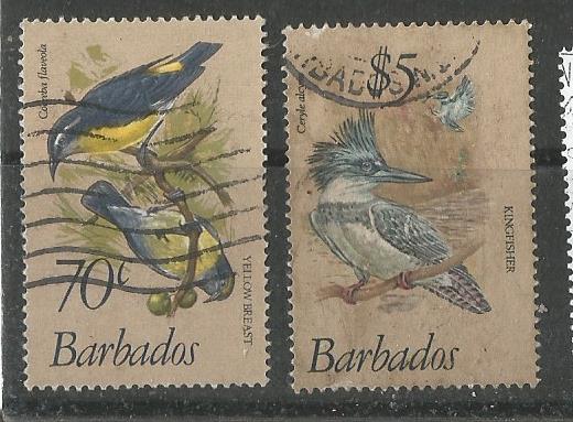 BARBADOS BIRDS 3