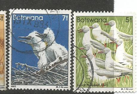 BOTSWANA BIRDS 3