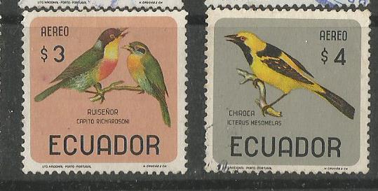 ECUADOR BIRDS 4