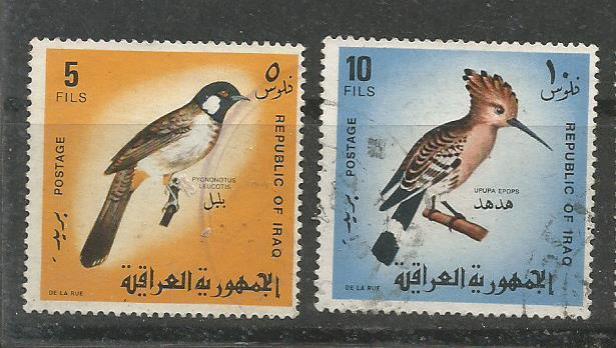 IRAQ BIRDS 1