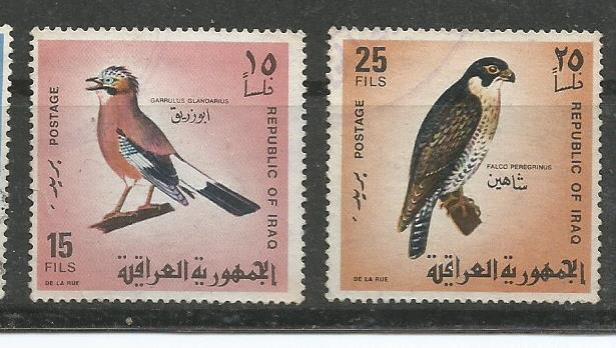 IRAQ BIRDS 2