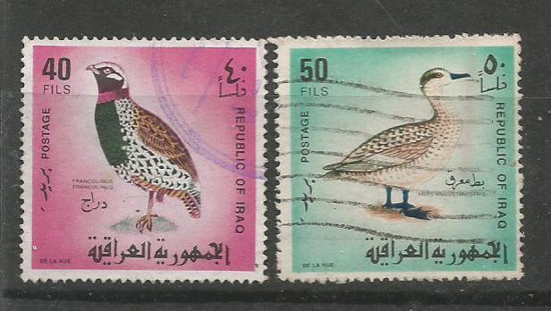 IRAQ BIRDS 3