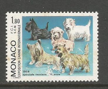MONACO DOG