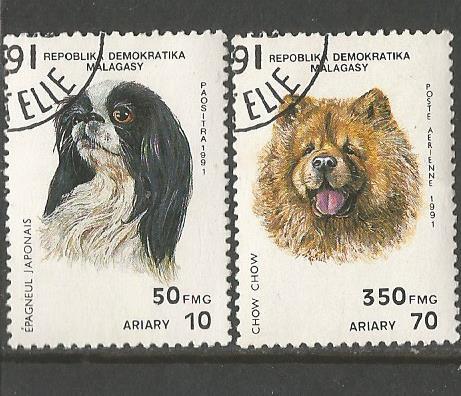 MADAGASCAR DOGS 1