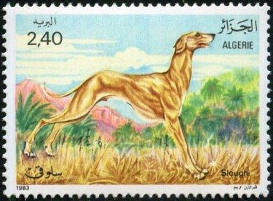 ALGERIA 1983 -ARABIAN GREYHOUND