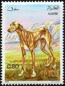Algeria Greyhound