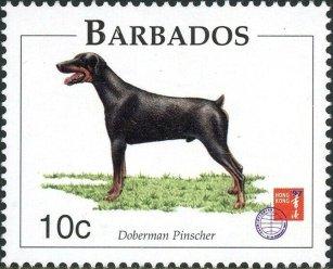 BARBADOS -DOGS