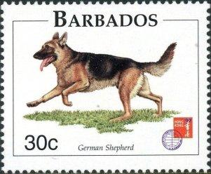 Barbados -German Shepherd