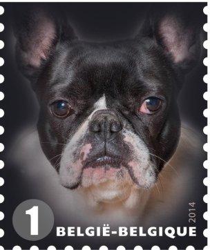 BELGIUM DOGS -2014