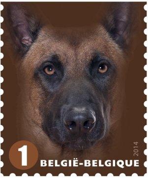 BELGIUM 2014 -DOGS