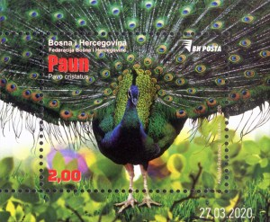 Bosnia Peacock