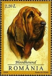 ROMANIA 2005- BLOODHOUND & JAGD TERRIER
