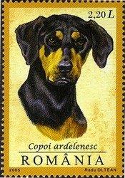 Romania Copoi