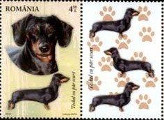 Romania Dachshund