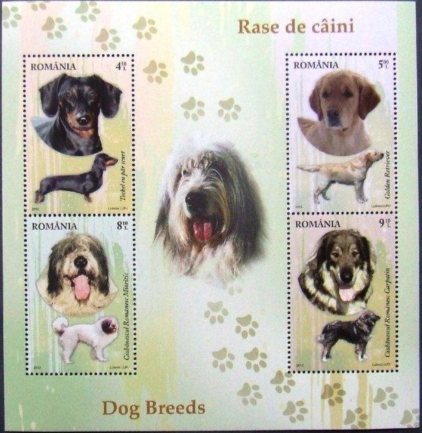 ROMANIA DOG BREEDS