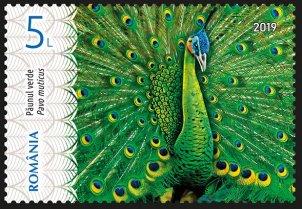 Romania Green Peafowl