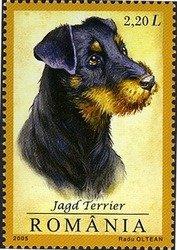 Romania Jagd Terrier